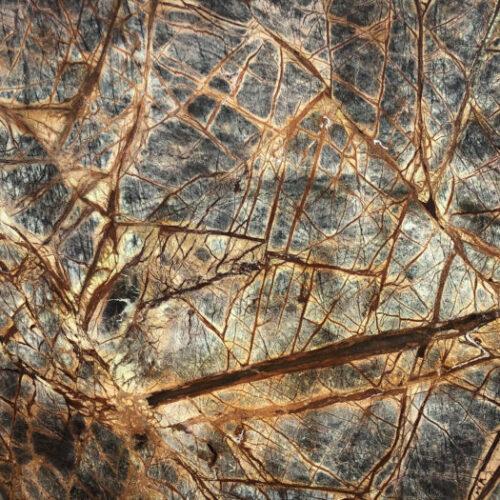 Rainforest-Brown-stonecenter-kopie-700x525